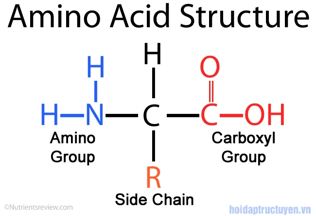 acid amin