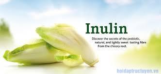 Inulin là gì?