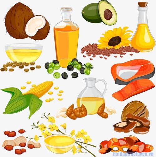 Fats hay chất béo là gì?