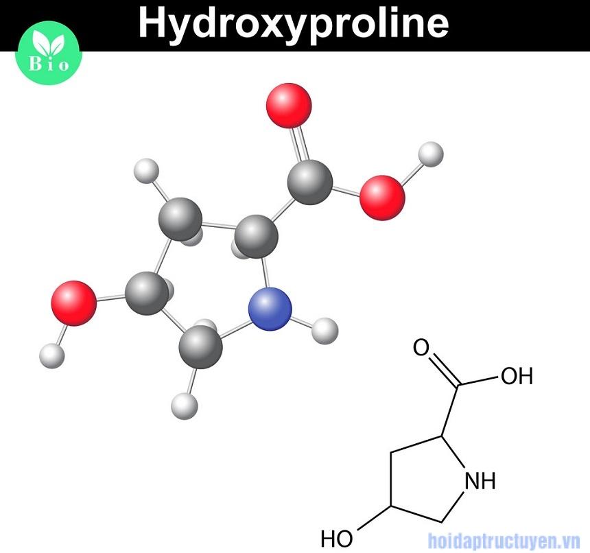 Hydroxyproline