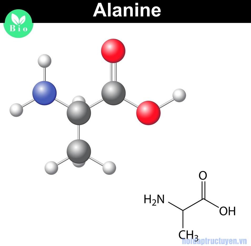 Alanine trong mỹ phẩm